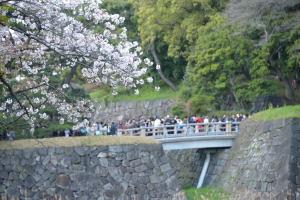 乾通り一般公開・桜と橋