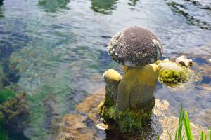忍野八海・土産の池