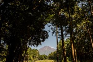 山宮浅間神社・富士山