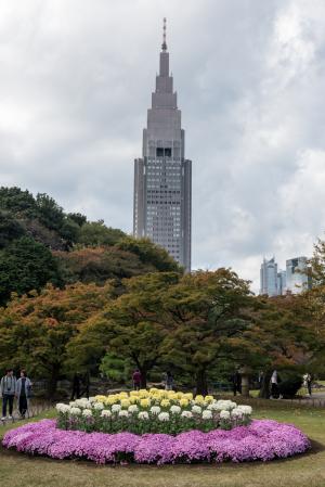 新宿御苑・菊花壇展