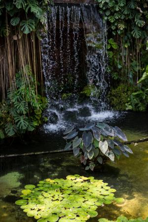 夢の島熱帯植物館