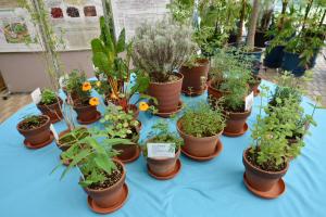 夢の島熱帯植物館・ハーブ展