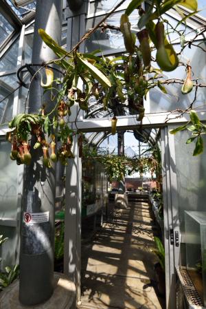 夢の島熱帯植物館・食虫植物