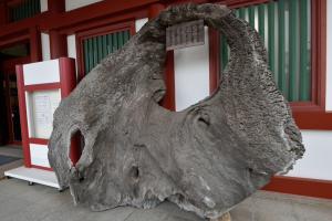厳島宝物館・大鳥居の部材