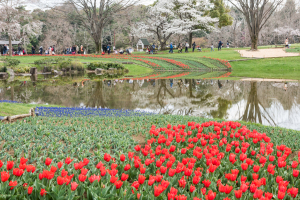 昭和記念公園・花畑