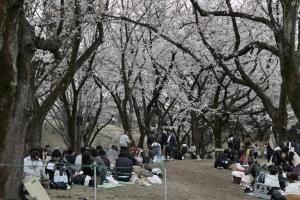 昭和記念公園・花見