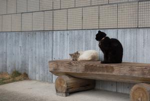 角牟礼城・わらべの館のネコ