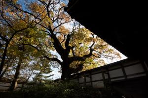 土浦城・本丸の塀