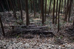 芥川城・竪土塁
