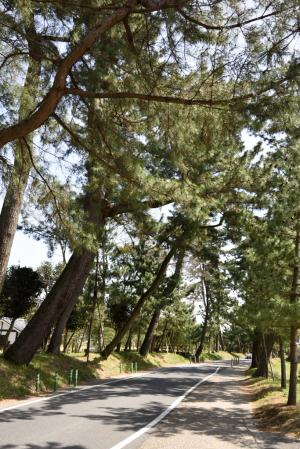 御油の松並木