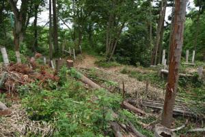 根小屋城跡・南曲輪北側の堀