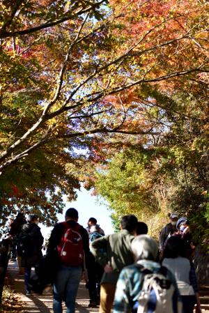 高尾山・山頂付近の紅葉
