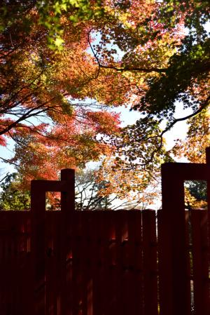 高尾山・本社付近の紅葉