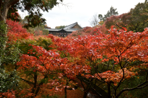 東福寺・臥雲橋からの眺め